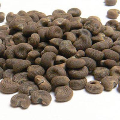 Ambretta Seed