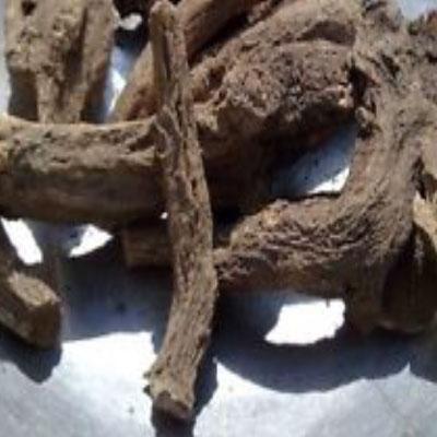 Gentian Roots Kutki